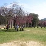 grecja-wiosna200816-150x150